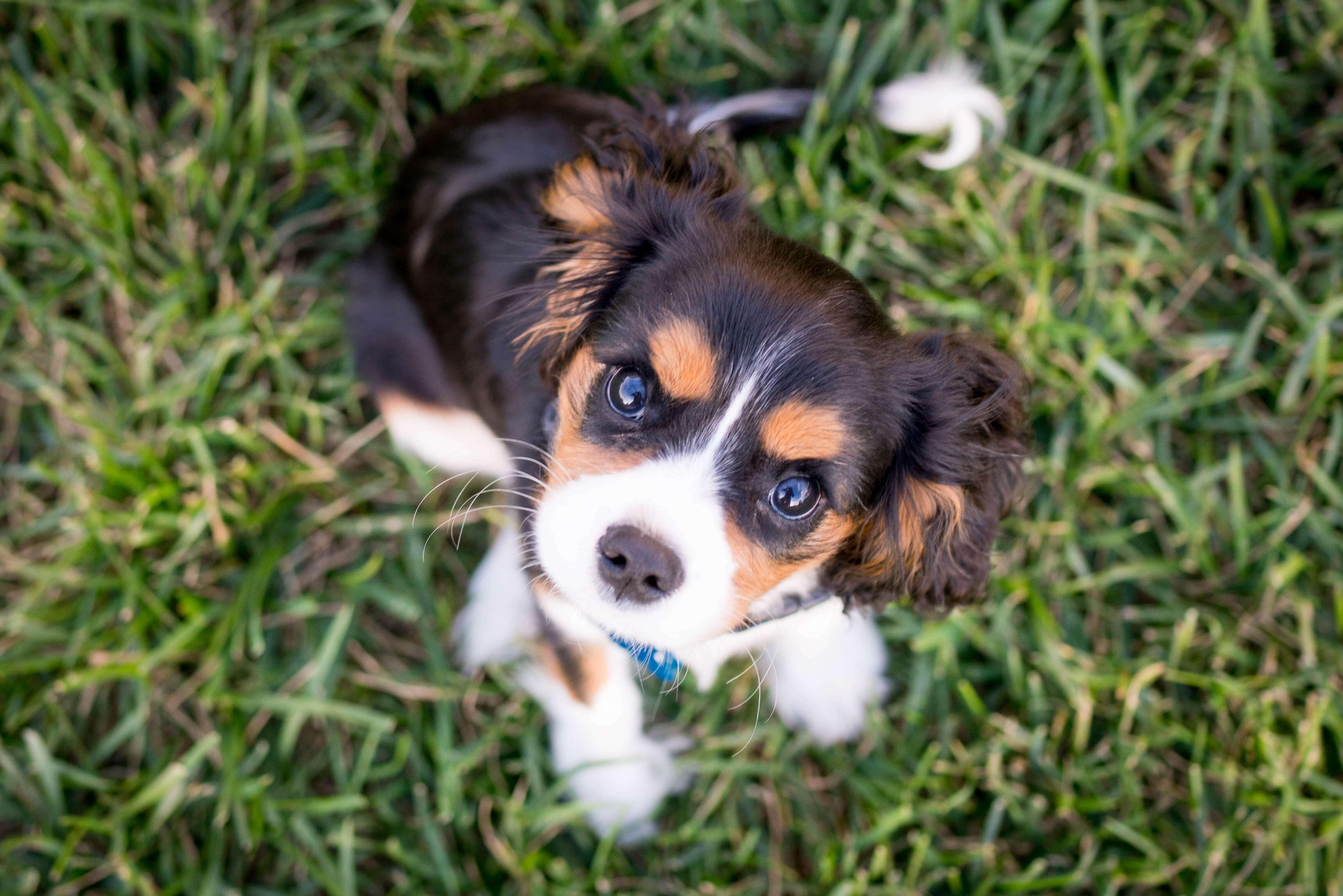 socialisatie checklist voor jouw puppy